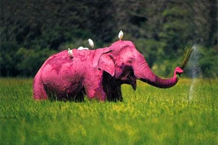 Tourist Captured Images Of A Pink Elephant At Kruger National Park